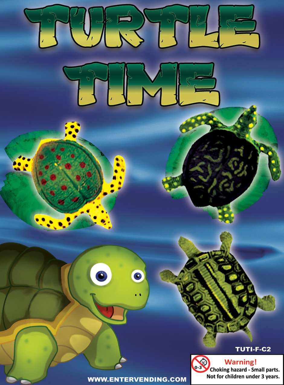 Turtle Time (display)
