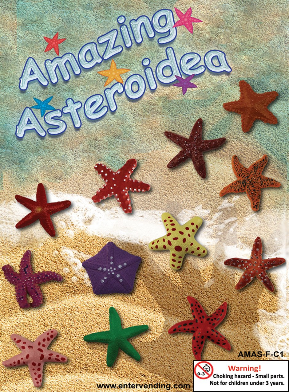 Amazing Asteroidea (display)